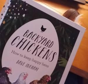 backyard chickens feathers